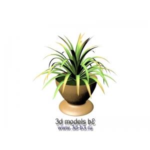 Юкка в цветочной вазе